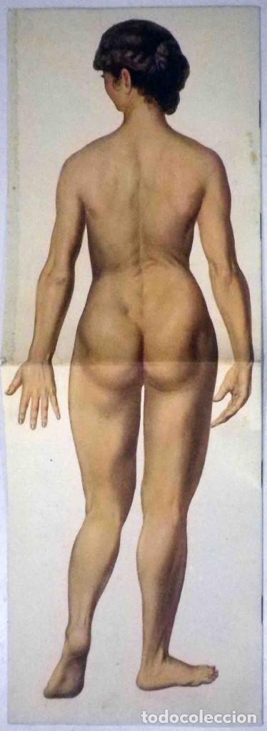 Libros antiguos: El cuerpo masculino y el cuerpo femenino - Editorial Orbis, 1920 - Completos. - Foto 14 - 140751742