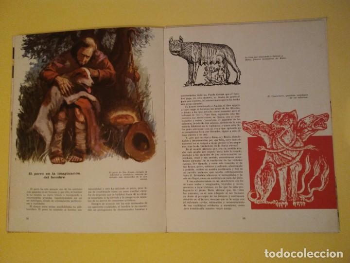 Libros antiguos: El perro nuestro amigo-Año1972-PLAZA JANES-editorial - Foto 7 - 147540694