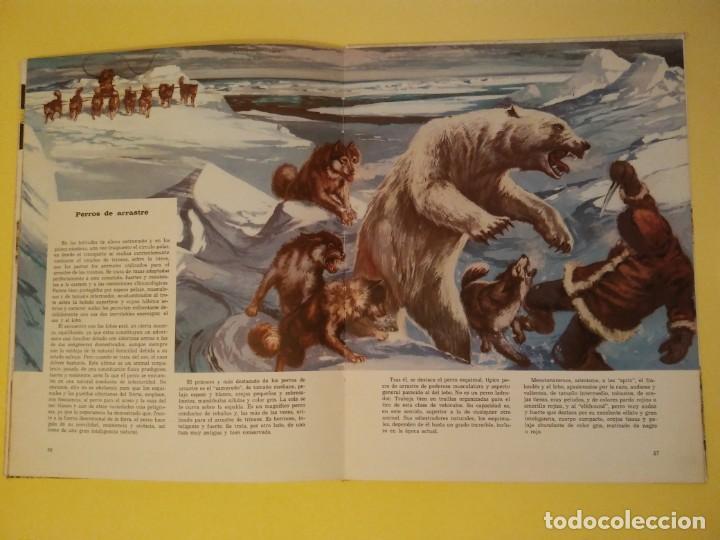 Libros antiguos: El perro nuestro amigo-Año1972-PLAZA JANES-editorial - Foto 8 - 147540694