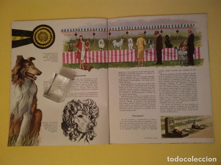 Libros antiguos: El perro nuestro amigo-Año1972-PLAZA JANES-editorial - Foto 11 - 147540694