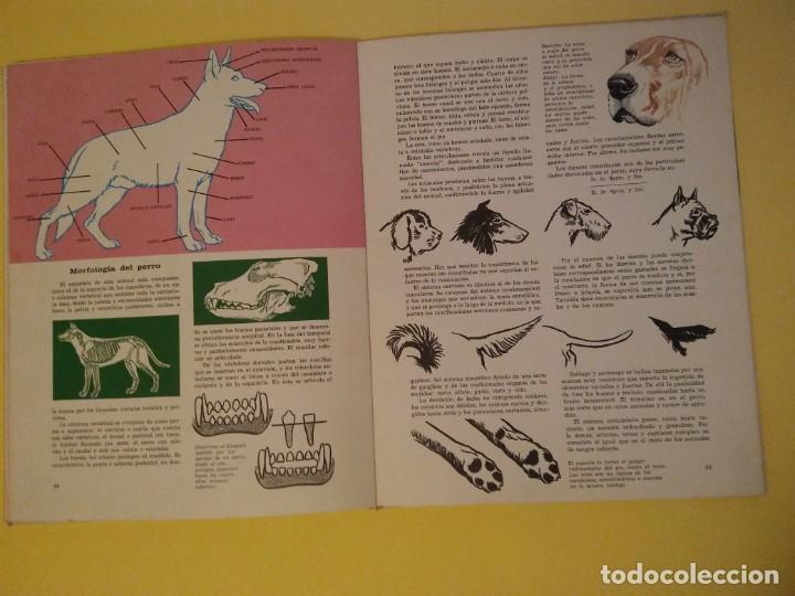 Libros antiguos: El perro nuestro amigo-Año1972-PLAZA JANES-editorial - Foto 13 - 147540694