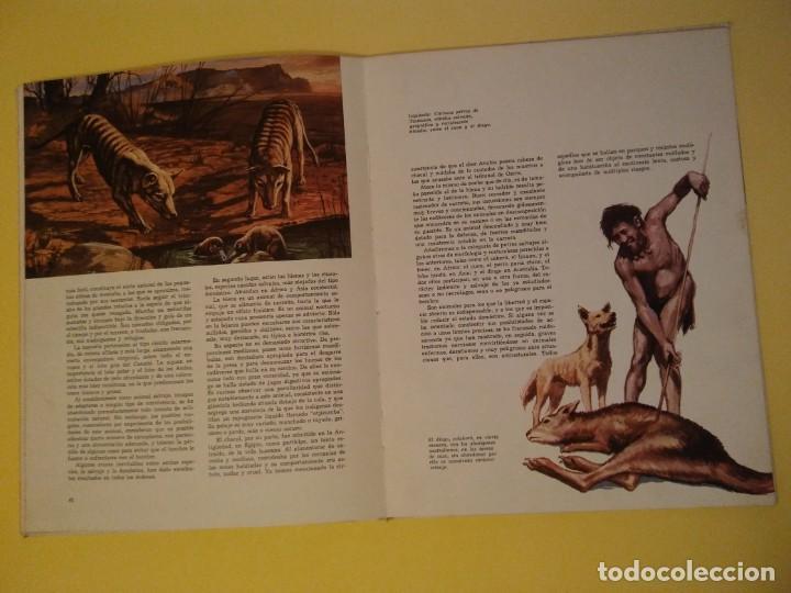 Libros antiguos: El perro nuestro amigo-Año1972-PLAZA JANES-editorial - Foto 15 - 147540694