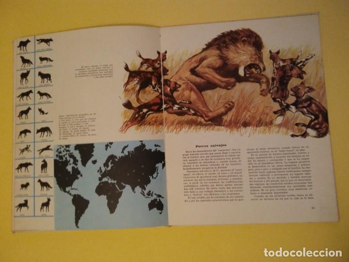 Libros antiguos: El perro nuestro amigo-Año1972-PLAZA JANES-editorial - Foto 16 - 147540694