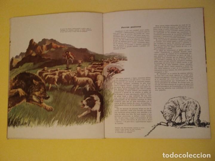 Libros antiguos: El perro nuestro amigo-Año1972-PLAZA JANES-editorial - Foto 20 - 147540694