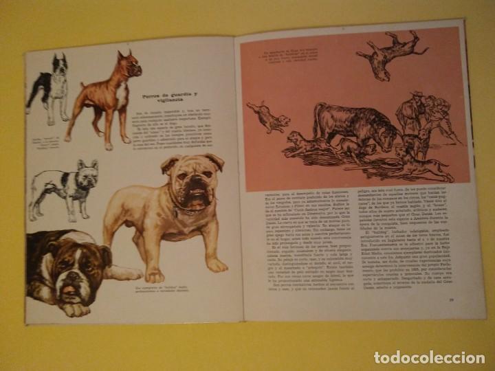 Libros antiguos: El perro nuestro amigo-Año1972-PLAZA JANES-editorial - Foto 21 - 147540694
