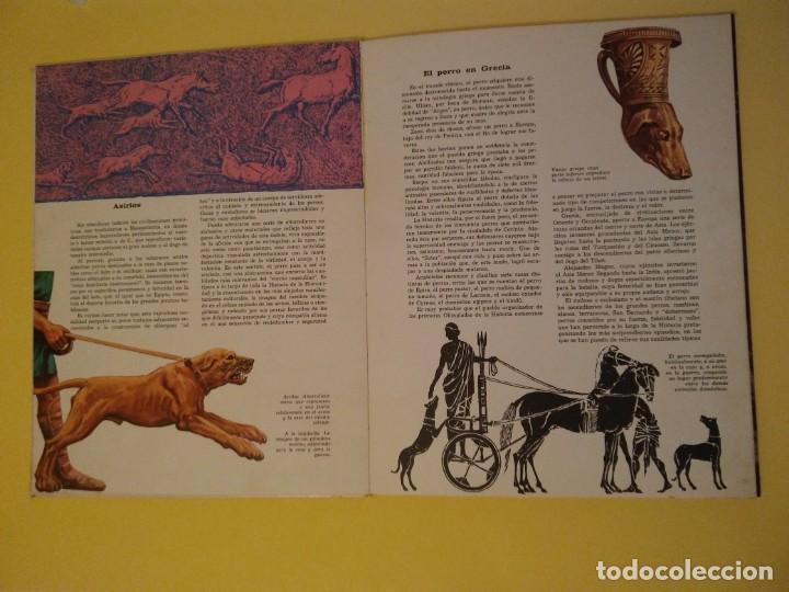Libros antiguos: El perro nuestro amigo-Año1972-PLAZA JANES-editorial - Foto 29 - 147540694