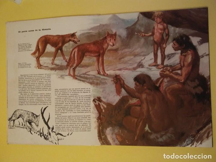 Libros antiguos: El perro nuestro amigo-Año1972-PLAZA JANES-editorial - Foto 32 - 147540694
