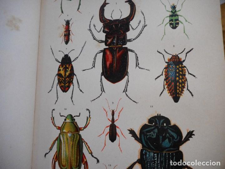 Libros antiguos: VV.AA Historia Natural (12 Tomos sueltos) Y92475 - Foto 4 - 150950838