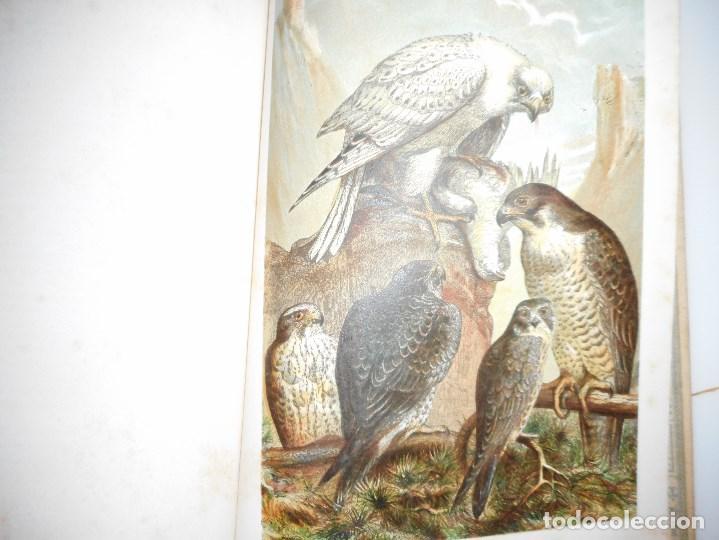 Libros antiguos: VV.AA Historia Natural (12 Tomos sueltos) Y92475 - Foto 5 - 150950838