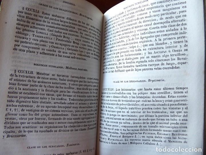Libros antiguos: L-5269. ELEMENTOS DE HISTORIA NATURAL. MILNE EDWARDS Y AQUILES COMTE. 3 TOMOS. BARCELONA AÑO 1846. - Foto 7 - 154007630