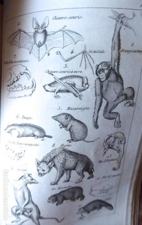Libros antiguos: L-5269. ELEMENTOS DE HISTORIA NATURAL. MILNE EDWARDS Y AQUILES COMTE. 3 TOMOS. BARCELONA AÑO 1846. - Foto 9 - 154007630