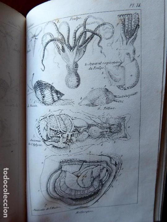 Libros antiguos: L-5269. ELEMENTOS DE HISTORIA NATURAL. MILNE EDWARDS Y AQUILES COMTE. 3 TOMOS. BARCELONA AÑO 1846. - Foto 10 - 154007630
