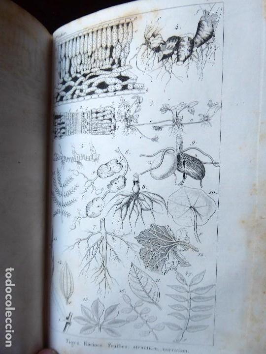 Libros antiguos: L-5269. ELEMENTOS DE HISTORIA NATURAL. MILNE EDWARDS Y AQUILES COMTE. 3 TOMOS. BARCELONA AÑO 1846. - Foto 16 - 154007630
