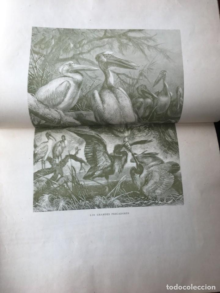 Libros antiguos: LA CAZA EN TODOS LOS PAISES Y A TRAVES DE LOS SIGLOS - CAMPWELL - 1886 - MUY ILUSTRADO - 4 TOMOS - Foto 17 - 155512942
