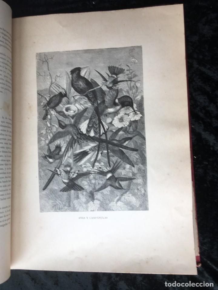 Libros antiguos: LA CAZA EN TODOS LOS PAISES Y A TRAVES DE LOS SIGLOS - CAMPWELL - 1886 - MUY ILUSTRADO - 4 TOMOS - Foto 19 - 155512942