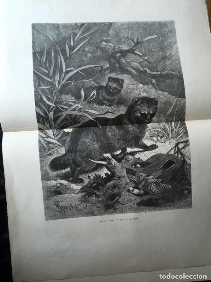 Libros antiguos: LA CAZA EN TODOS LOS PAISES Y A TRAVES DE LOS SIGLOS - CAMPWELL - 1886 - MUY ILUSTRADO - 4 TOMOS - Foto 41 - 155512942