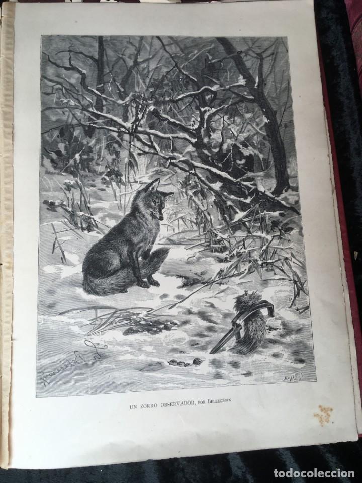Libros antiguos: LA CAZA EN TODOS LOS PAISES Y A TRAVES DE LOS SIGLOS - CAMPWELL - 1886 - MUY ILUSTRADO - 4 TOMOS - Foto 42 - 155512942