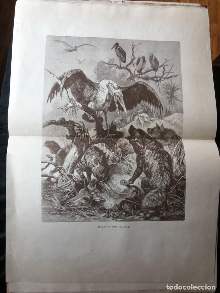 Libros antiguos: LA CAZA EN TODOS LOS PAISES Y A TRAVES DE LOS SIGLOS - CAMPWELL - 1886 - MUY ILUSTRADO - 4 TOMOS - Foto 47 - 155512942
