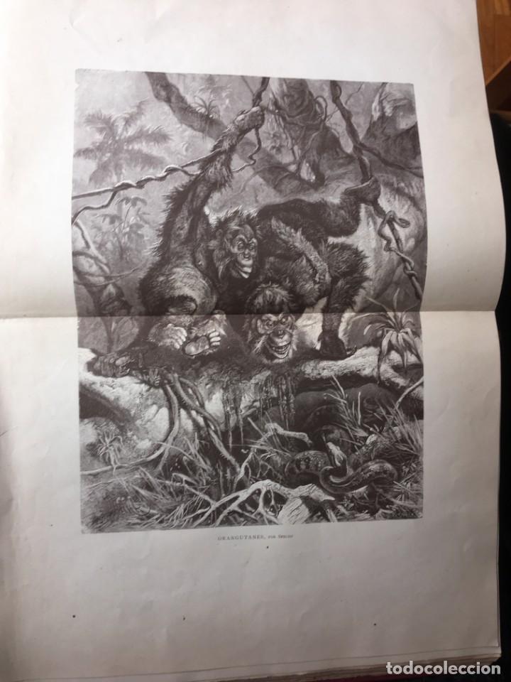 Libros antiguos: LA CAZA EN TODOS LOS PAISES Y A TRAVES DE LOS SIGLOS - CAMPWELL - 1886 - MUY ILUSTRADO - 4 TOMOS - Foto 54 - 155512942