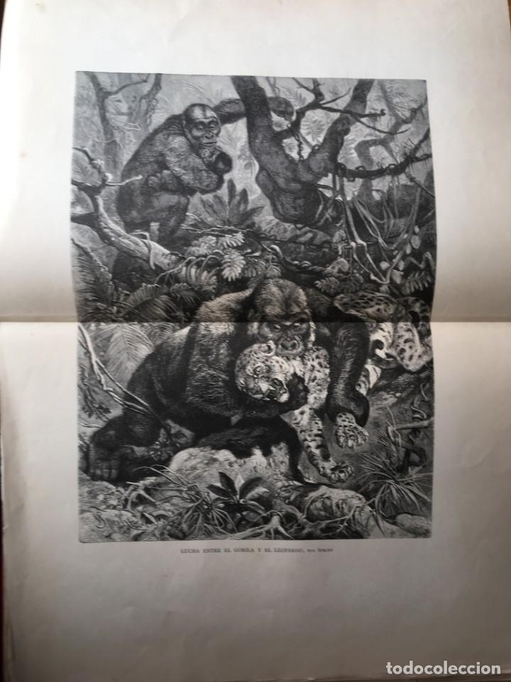 Libros antiguos: LA CAZA EN TODOS LOS PAISES Y A TRAVES DE LOS SIGLOS - CAMPWELL - 1886 - MUY ILUSTRADO - 4 TOMOS - Foto 55 - 155512942