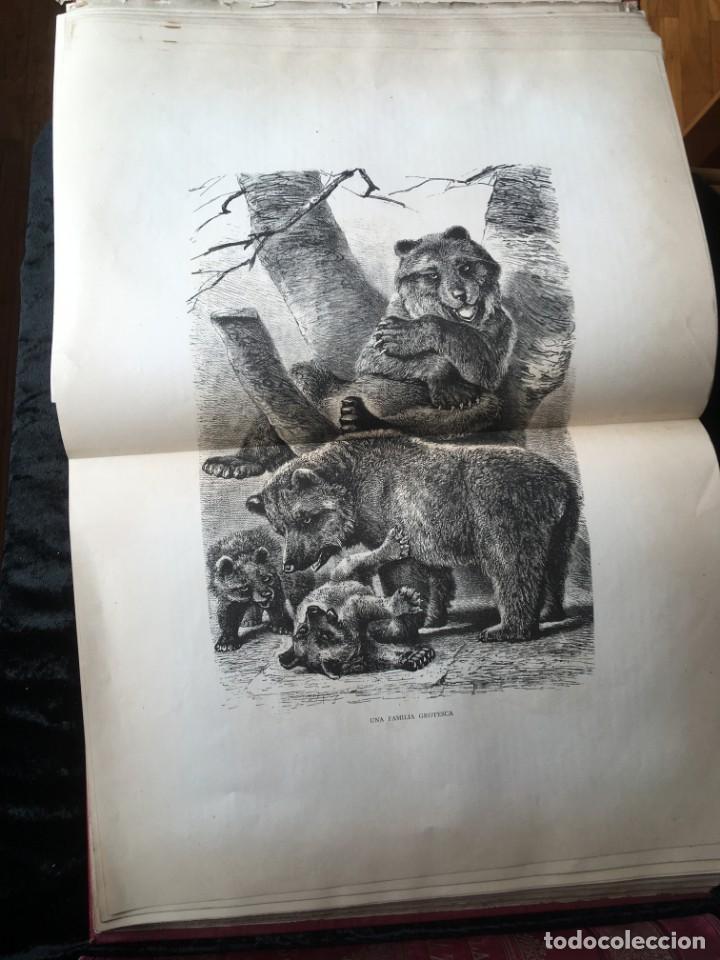 Libros antiguos: LA CAZA EN TODOS LOS PAISES Y A TRAVES DE LOS SIGLOS - CAMPWELL - 1886 - MUY ILUSTRADO - 4 TOMOS - Foto 62 - 155512942