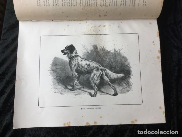 Libros antiguos: LA CAZA EN TODOS LOS PAISES Y A TRAVES DE LOS SIGLOS - CAMPWELL - 1886 - MUY ILUSTRADO - 4 TOMOS - Foto 103 - 155512942