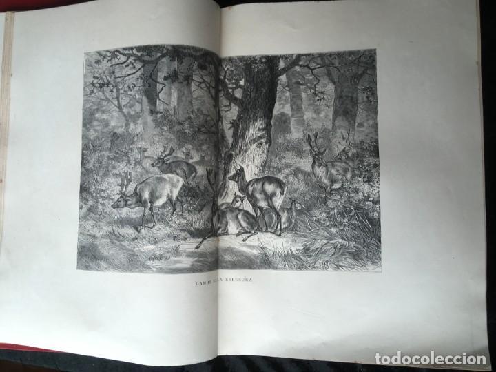 Libros antiguos: LA CAZA EN TODOS LOS PAISES Y A TRAVES DE LOS SIGLOS - CAMPWELL - 1886 - MUY ILUSTRADO - 4 TOMOS - Foto 109 - 155512942