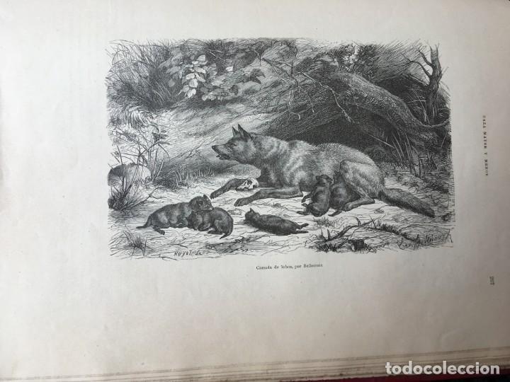 Libros antiguos: LA CAZA EN TODOS LOS PAISES Y A TRAVES DE LOS SIGLOS - CAMPWELL - 1886 - MUY ILUSTRADO - 4 TOMOS - Foto 126 - 155512942
