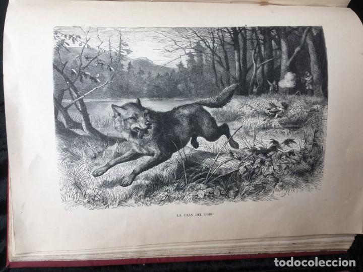 Libros antiguos: LA CAZA EN TODOS LOS PAISES Y A TRAVES DE LOS SIGLOS - CAMPWELL - 1886 - MUY ILUSTRADO - 4 TOMOS - Foto 127 - 155512942