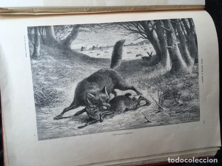 Libros antiguos: LA CAZA EN TODOS LOS PAISES Y A TRAVES DE LOS SIGLOS - CAMPWELL - 1886 - MUY ILUSTRADO - 4 TOMOS - Foto 128 - 155512942