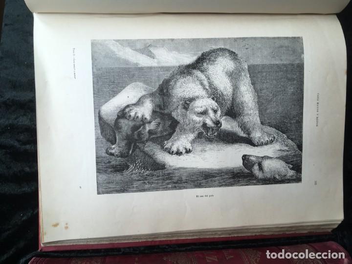Libros antiguos: LA CAZA EN TODOS LOS PAISES Y A TRAVES DE LOS SIGLOS - CAMPWELL - 1886 - MUY ILUSTRADO - 4 TOMOS - Foto 130 - 155512942