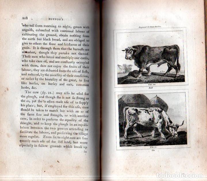 Libros antiguos: BUFFON´S NATURAL HIFTORY. BARR´S BUFFON. A THEORY OF THE EARTH A GENERAL HISTORY OF MAN.1797. VOL. V - Foto 5 - 157225518