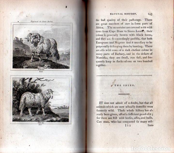 Libros antiguos: BUFFON´S NATURAL HIFTORY. BARR´S BUFFON. A THEORY OF THE EARTH A GENERAL HISTORY OF MAN.1797. VOL. V - Foto 6 - 157225518
