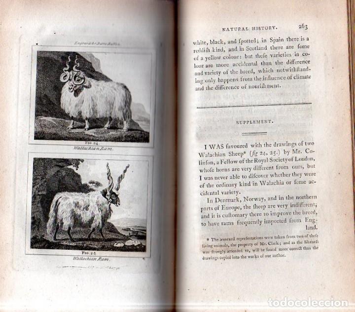 Libros antiguos: BUFFON´S NATURAL HIFTORY. BARR´S BUFFON. A THEORY OF THE EARTH A GENERAL HISTORY OF MAN.1797. VOL. V - Foto 7 - 157225518