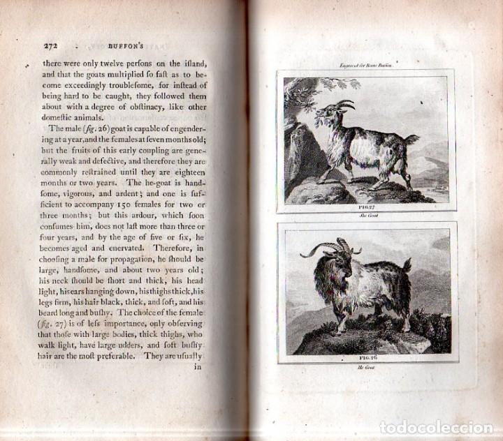 Libros antiguos: BUFFON´S NATURAL HIFTORY. BARR´S BUFFON. A THEORY OF THE EARTH A GENERAL HISTORY OF MAN.1797. VOL. V - Foto 8 - 157225518