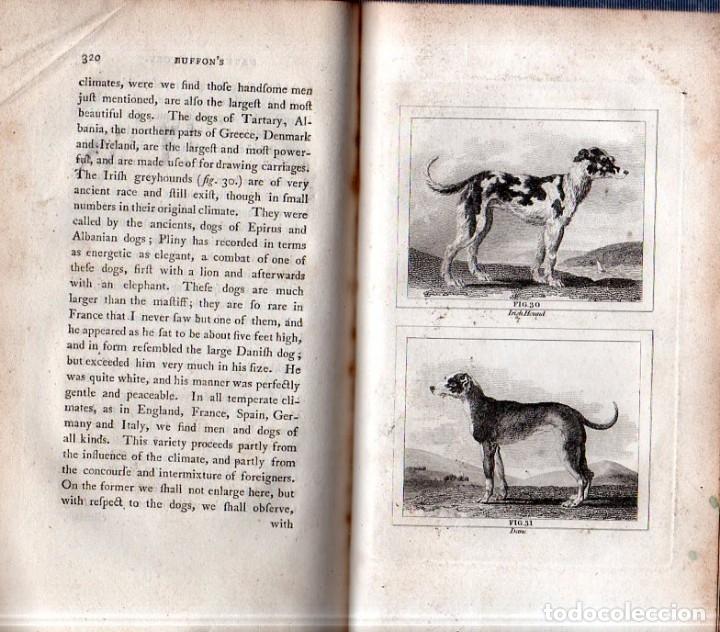 Libros antiguos: BUFFON´S NATURAL HIFTORY. BARR´S BUFFON. A THEORY OF THE EARTH A GENERAL HISTORY OF MAN.1797. VOL. V - Foto 10 - 157225518