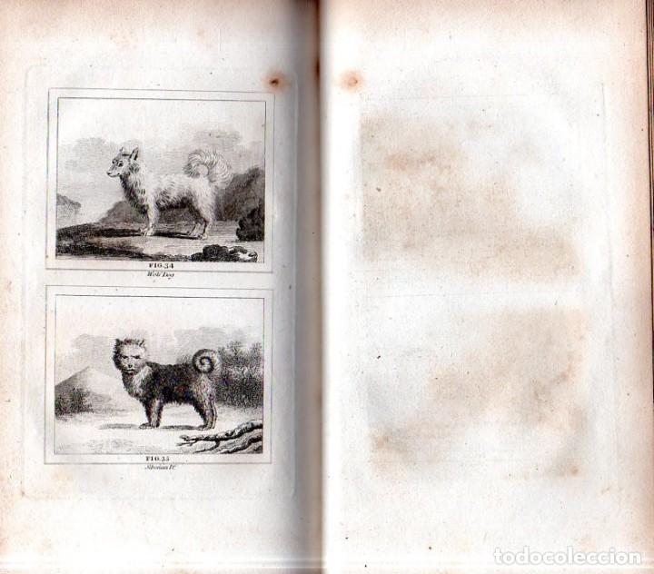 Libros antiguos: BUFFON´S NATURAL HIFTORY. BARR´S BUFFON. A THEORY OF THE EARTH A GENERAL HISTORY OF MAN.1797. VOL. V - Foto 11 - 157225518