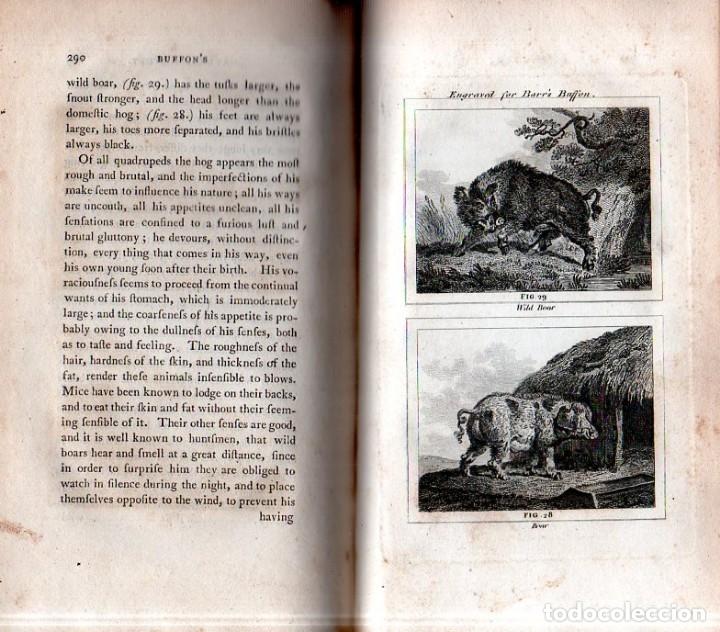 Libros antiguos: BUFFON´S NATURAL HIFTORY. BARR´S BUFFON. A THEORY OF THE EARTH A GENERAL HISTORY OF MAN.1797. VOL. V - Foto 9 - 157225518