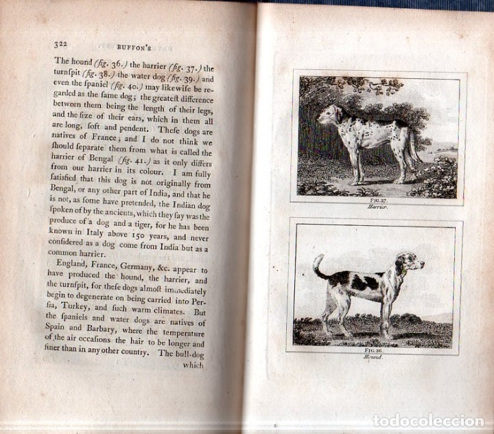 Libros antiguos: BUFFON´S NATURAL HIFTORY. BARR´S BUFFON. A THEORY OF THE EARTH A GENERAL HISTORY OF MAN.1797. VOL. V - Foto 13 - 157225518