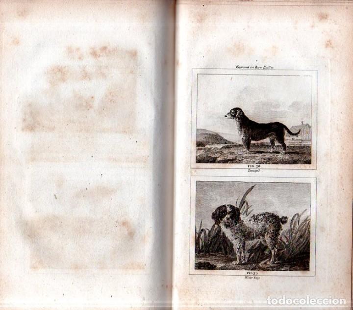 Libros antiguos: BUFFON´S NATURAL HIFTORY. BARR´S BUFFON. A THEORY OF THE EARTH A GENERAL HISTORY OF MAN.1797. VOL. V - Foto 14 - 157225518