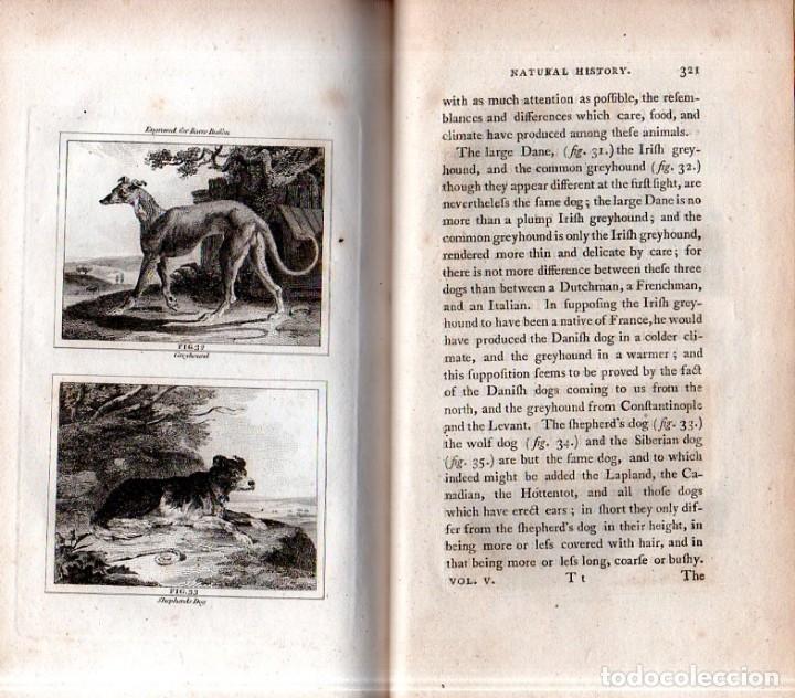 Libros antiguos: BUFFON´S NATURAL HIFTORY. BARR´S BUFFON. A THEORY OF THE EARTH A GENERAL HISTORY OF MAN.1797. VOL. V - Foto 12 - 157225518