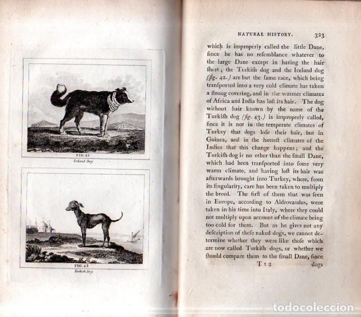 Libros antiguos: BUFFON´S NATURAL HIFTORY. BARR´S BUFFON. A THEORY OF THE EARTH A GENERAL HISTORY OF MAN.1797. VOL. V - Foto 16 - 157225518
