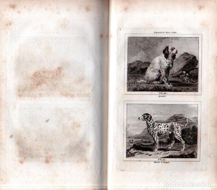 Libros antiguos: BUFFON´S NATURAL HIFTORY. BARR´S BUFFON. A THEORY OF THE EARTH A GENERAL HISTORY OF MAN.1797. VOL. V - Foto 15 - 157225518