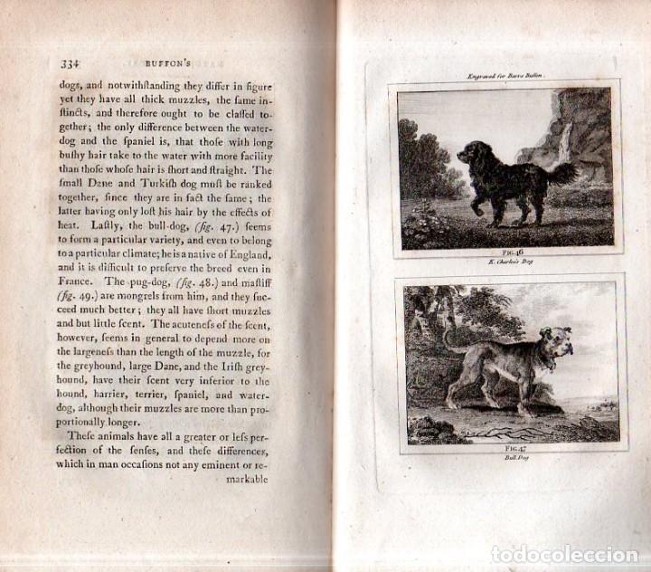 Libros antiguos: BUFFON´S NATURAL HIFTORY. BARR´S BUFFON. A THEORY OF THE EARTH A GENERAL HISTORY OF MAN.1797. VOL. V - Foto 18 - 157225518