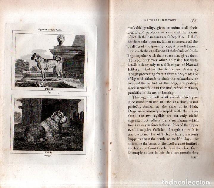 Libros antiguos: BUFFON´S NATURAL HIFTORY. BARR´S BUFFON. A THEORY OF THE EARTH A GENERAL HISTORY OF MAN.1797. VOL. V - Foto 19 - 157225518
