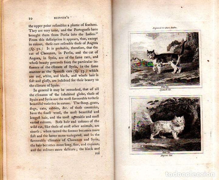 Libros antiguos: BUFFON´S NATURAL HIFTORY. BARR´S BUFFON. A THEORY OF THE EARTH A GENERAL HISTORY OF MAN.1797. VOL VI - Foto 6 - 158026886