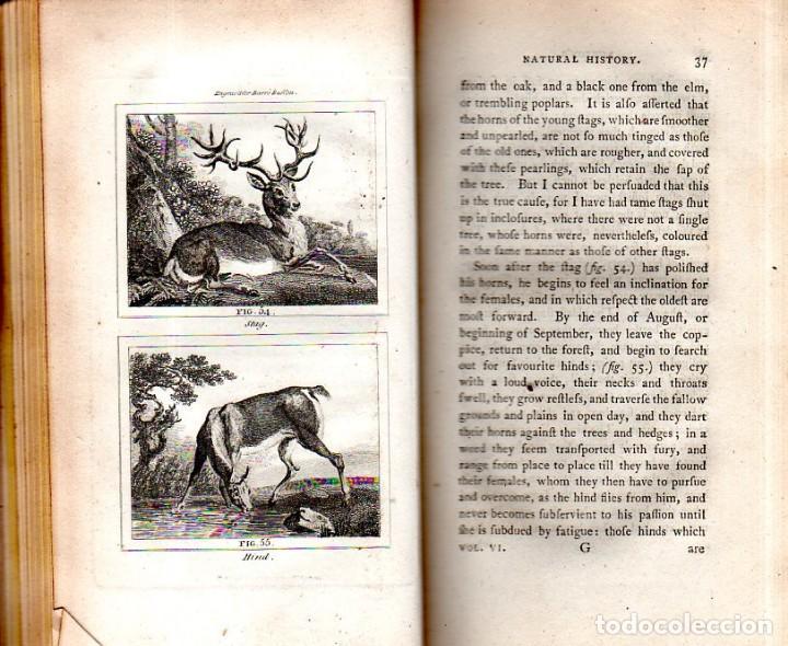 Libros antiguos: BUFFON´S NATURAL HIFTORY. BARR´S BUFFON. A THEORY OF THE EARTH A GENERAL HISTORY OF MAN.1797. VOL VI - Foto 7 - 158026886