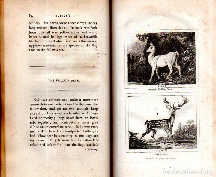 Libros antiguos: BUFFON´S NATURAL HIFTORY. BARR´S BUFFON. A THEORY OF THE EARTH A GENERAL HISTORY OF MAN.1797. VOL VI - Foto 8 - 158026886
