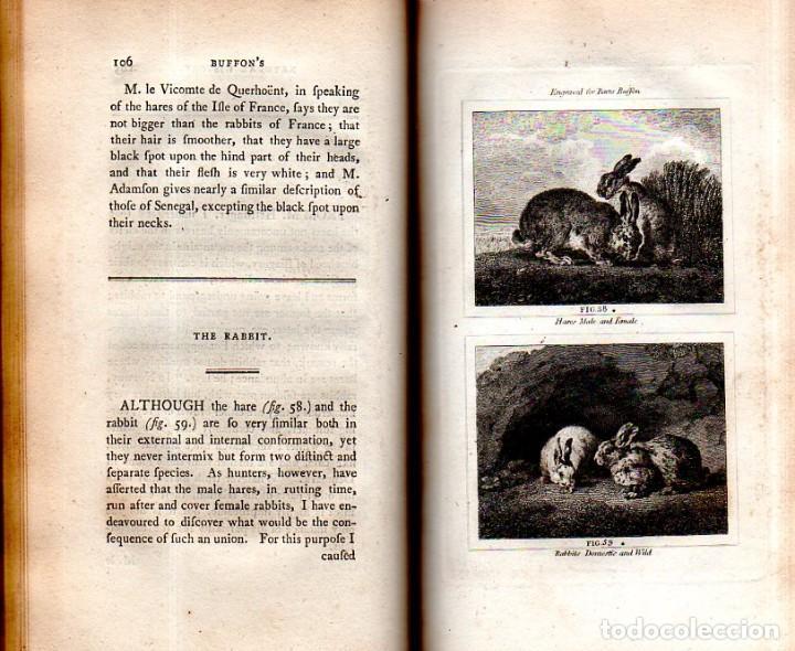 Libros antiguos: BUFFON´S NATURAL HIFTORY. BARR´S BUFFON. A THEORY OF THE EARTH A GENERAL HISTORY OF MAN.1797. VOL VI - Foto 9 - 158026886
