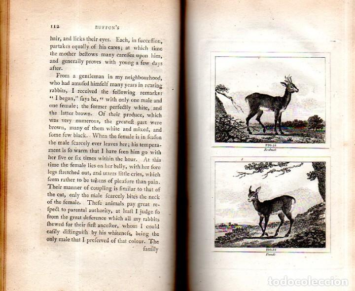 Libros antiguos: BUFFON´S NATURAL HIFTORY. BARR´S BUFFON. A THEORY OF THE EARTH A GENERAL HISTORY OF MAN.1797. VOL VI - Foto 10 - 158026886